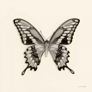 Butterfly VI BW Crop