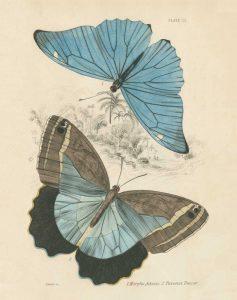 Assortment Butterflies I