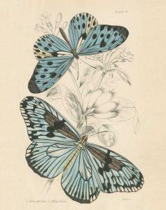 Assortment Butterflies II