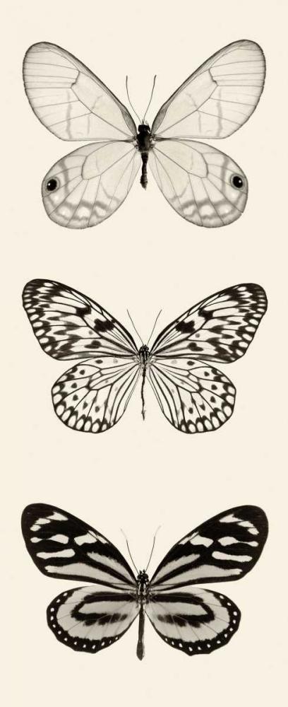 Butterfly BW Panel II
