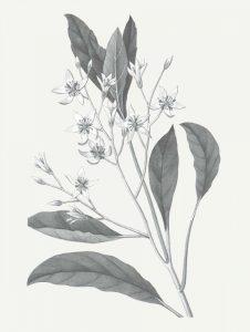 Neutral Botanical V
