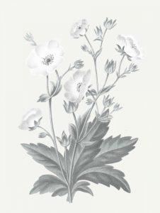 Neutral Botanical VI