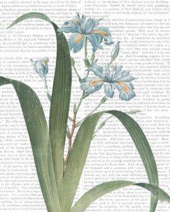 Summer Botanicals III