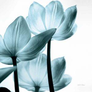 Translucent Tulips III Sq Aqua Crop