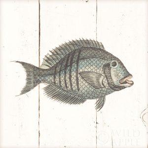 Fish Sketches I Shiplap