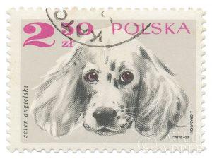 Poland Stamp IV on White