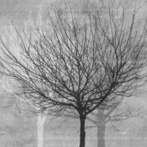 Winter Silhouette 1
