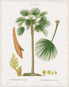 Island Botanicals I