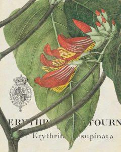 Botanique Tropicale I