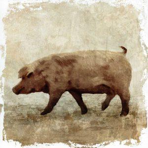 Pig white border