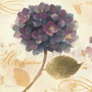 Abundant Hydrangea II
