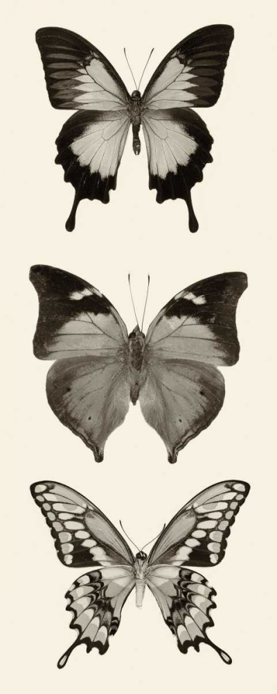 Butterfly BW Panel I