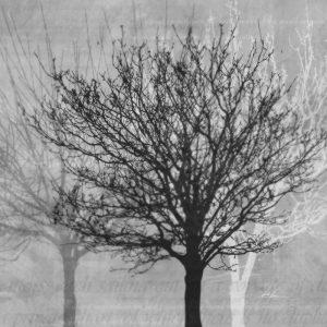 Winter Silhouette 2