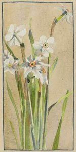 White Narcissus with Gray Accents