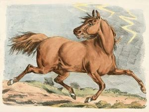 Brown Horse Running, 1817