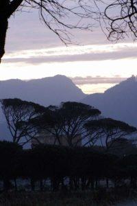 Trees in Landscape II