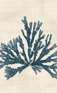 Pacific Sea Mosses IV No Map Crop