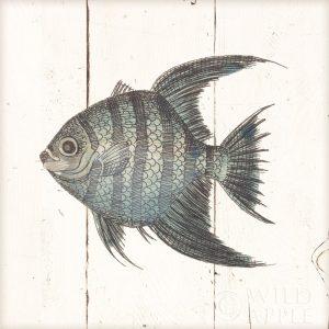 Fish Sketches II Shiplap