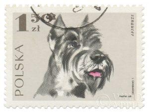 Poland Stamp I on White