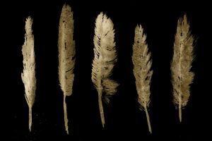 Gold Feathers I