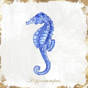 Blue Sea Horse