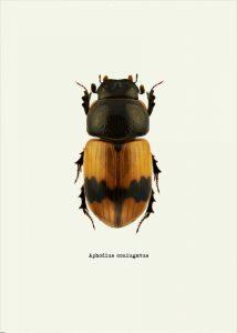 Beetle Orange