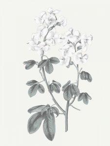 Neutral Botanical III