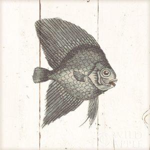 Fish Sketches III Shiplap
