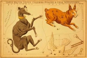 Canis Major, Lepus, Columba Noachi and Cela Sculptoris, 1825