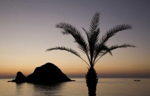 UAE, Fujairah Snoopy Island and palm tree