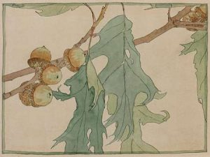 Oak/Acorns
