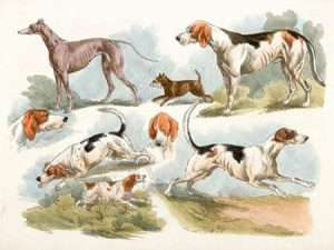 Hunting Dogs, 1817