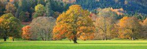Mixed trees in autumn colour Scotland