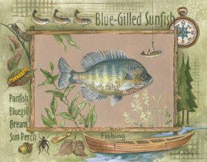 Blue-Gilled Sunfish