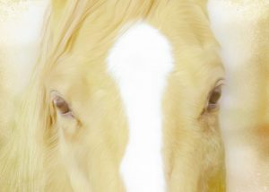 Innocent Eyes of a Horse