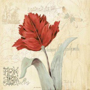 Tulip Gem II