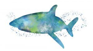 Watercolor Shark I
