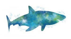 Watercolor Shark III