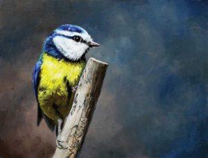 Overwatch Bird