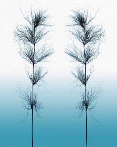 Ice Winter Grass