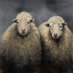 Sheeps Wool