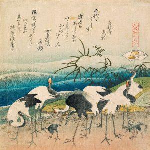 Herd of cranes