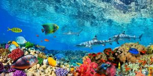 Reef Sharks and fish- Indian Sea
