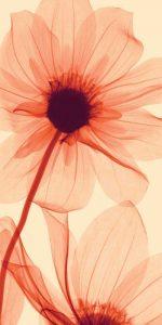 Flora – D