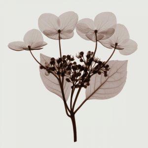 Hydrangea Stem Trio – A