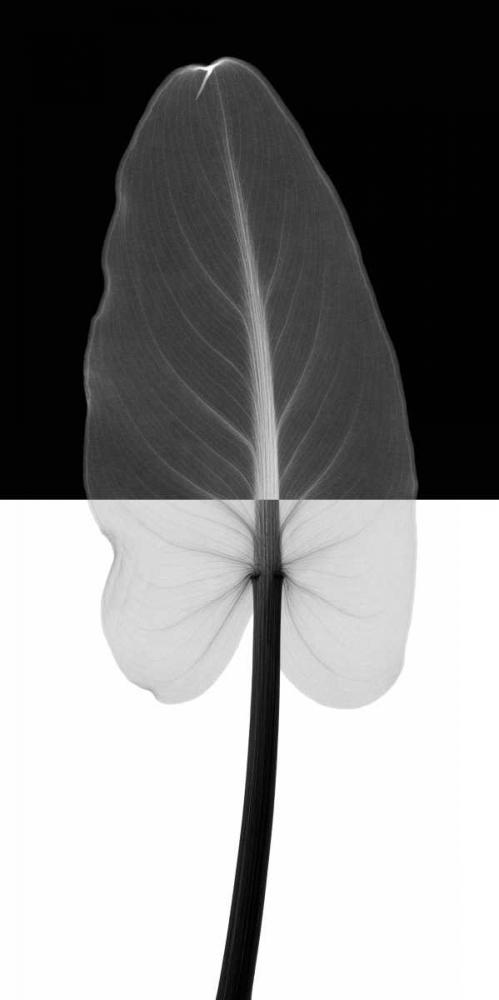 Calla Leaf I (oversize)