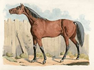 Dark-Brown Horse, 1817