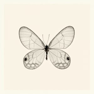 Butterfly I BW Crop