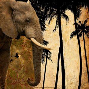 Mighty Elephant 1