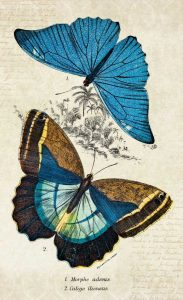 Kirby Butterflies II